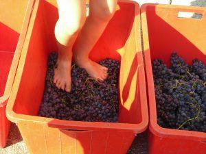 grape-stomping